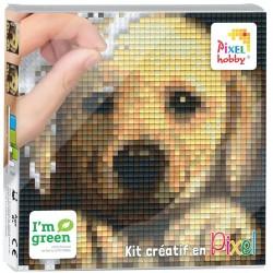 Kit Créatif Pixel tableau 12x12cm - Chien